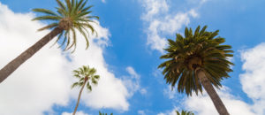 Palm Trees in Beverly Hills California